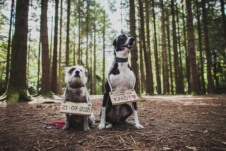 Dogs with wedding signs, stover country park